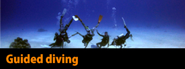 Guided diving